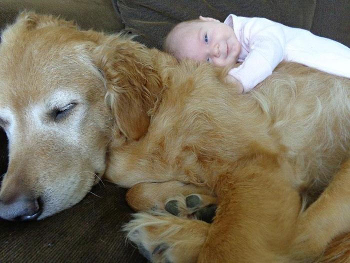 Đáng yêu hình ảnh các bé bên những chú chó khổng lồ