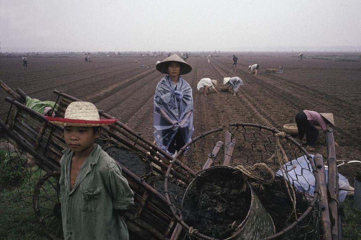 Người nông dân trên cánh đồngHà Nội
