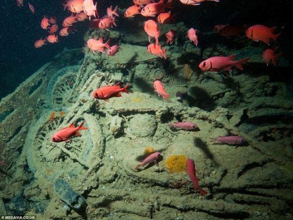SS Thistlegorm giờ đây là nơi trú ngụ của các loài sinh vật biển.