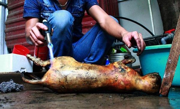 Đầu bếp cạo sạch lông và nướng sơ qua con mèo trước khi chế biến. Ảnh: AFP