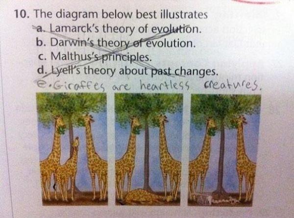 Hình minh họa dưới đây miêu tả câu nào chính xác nhất?Học sinh đã đánh chéo bỏ cả 4 câu và thêm vào: câu e. Hươu cao cổ là bọn máu lạnh.