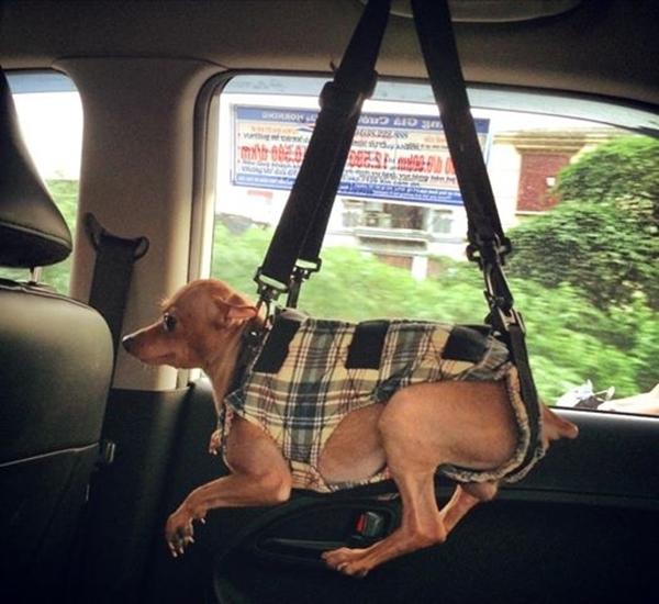 """Văn Mai Hương khiến fan vô cùng thích thú với cách """"phạt"""" cún cưng """"có một không hai"""" do cô nàng nghĩ ra. Cô nàng hớn hở: """"Hình phạt cho kẻ quậy phá và kêu gào trên taxi. Em bé im re 10 phút..haha.."""""""
