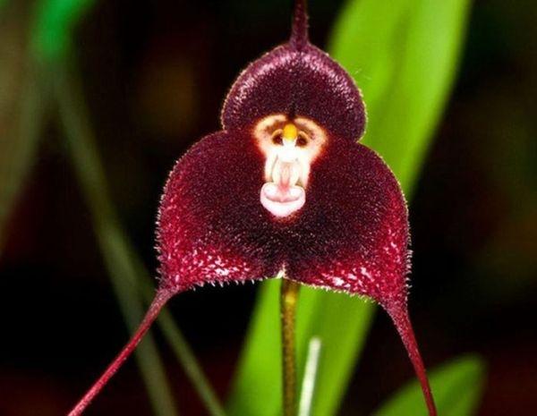 Kinh ngạc với những loài hoa mang dáng hình động vật