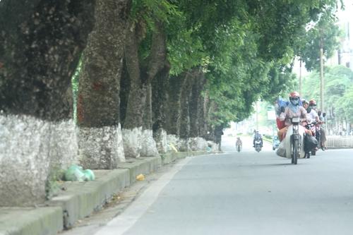 Hà Nội chặt hàng loạt cây cổ thụ để làm đường sắt nội đô