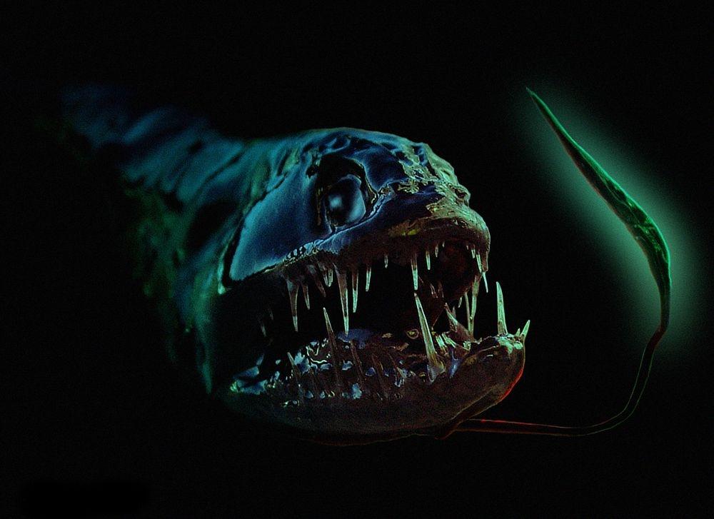 Những loại cá hình thù kinh dị nhất