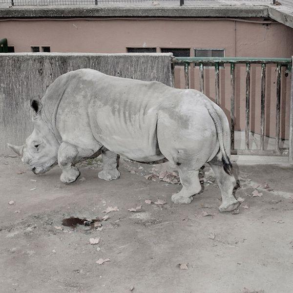 Ám ảnh với những khoảnh khắc cô đơn của động vật bị giam ở vườn thú