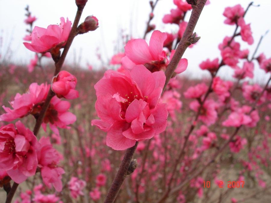 Công dụng làm đẹp ít ai ngờ từ cánh hoa