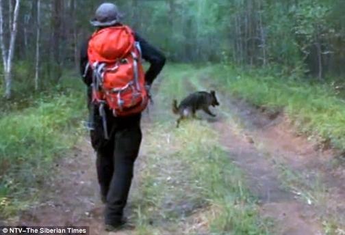 Bé 3 tuổi sống sót sau 11 ngày lạc trong rừng taiga