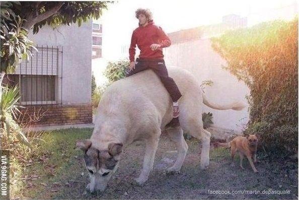Phát hiện chó khổng lồ đã có mặt trên hành tinh này