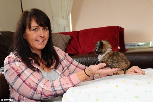 Thích thú với chú cún tí hon nhất nước Anh