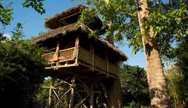"""5 khách sạn trên cây """"đỉnh"""" nhất nhì thế giới"""