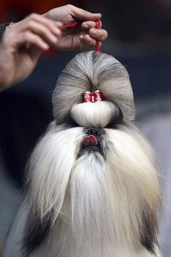Các em cún còn được chủ của mình buộc cho những kiểu đầu lạ mắt