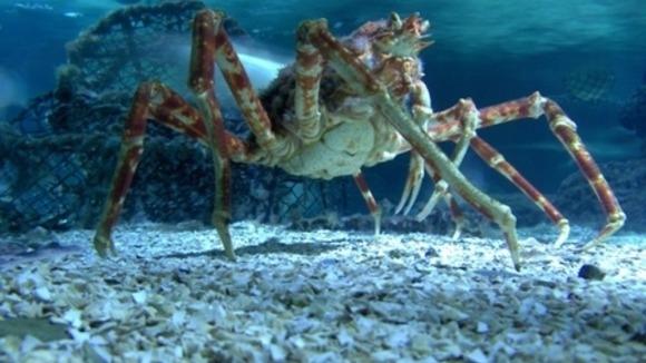 10 sinh vật có hình thù quái đản rùng rợn nhất đại dương