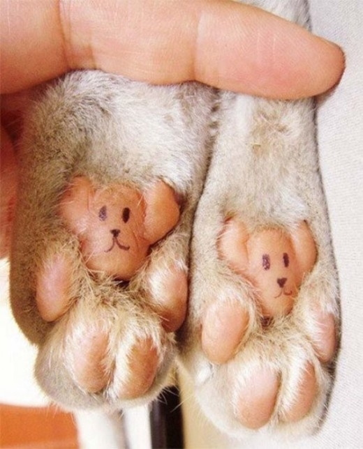 Điều bất ngờ phía dưới bàn chân của các chú thú cưng