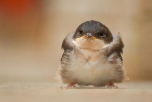 Đây có phải là hình mẫu của trò Angry Bird?
