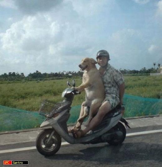 Hôm nào mệt mỏi quá thì có thể nhờ cún yêu lấy xe chởi đi chơi