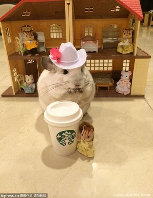 Cộng đồng mạng phát sốt vì chú sóc siêu đáng yêu