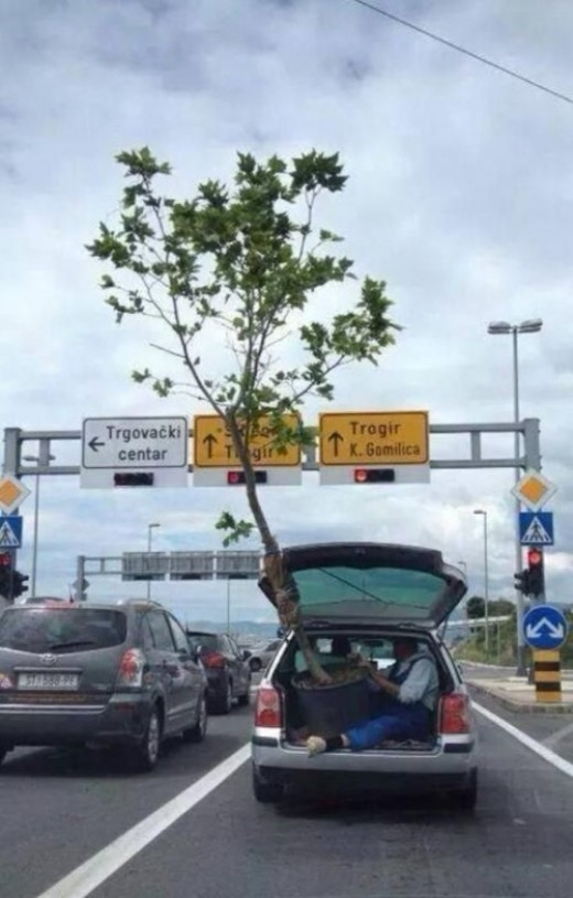 Những người này không biết đã nghĩ gì khi mang cái cây đó về nhỉ