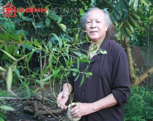 """Ông Nguyễn Hữu Trọng: """"Tôi uống cây thuốc này hàng ngày"""" (Ảnh: Xuân Hải)"""