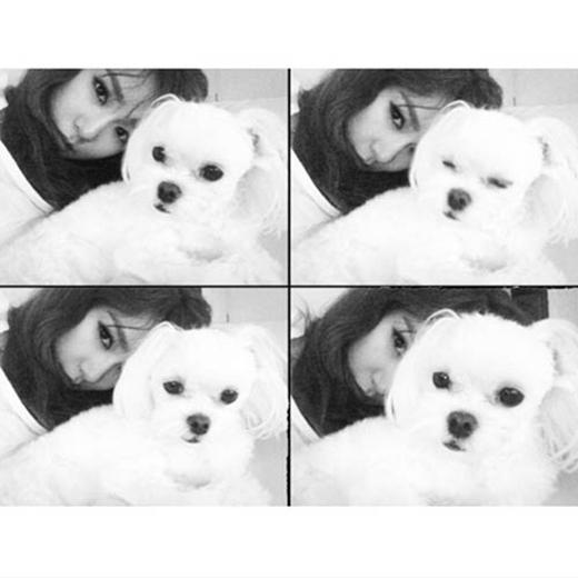Tiffany khoe hình tự sướng cùng chú cún cưng của mình và không quên kêu gọi các fan nhớ theo dõi chương trình The TaeTiSeo
