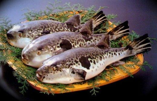 Những món hải sản đặc trưng trên khắp thế giới