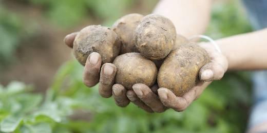 """Cô gái trồng khoai tây trong…. """"vùng kín"""""""