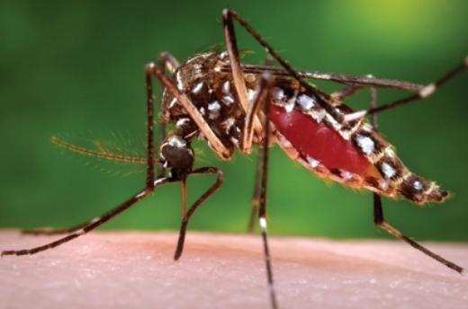 Những cách trị vết muỗi đốt hữu hiệu