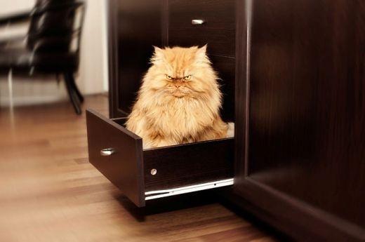 Chú mèo mặt ác nhất thế giới
