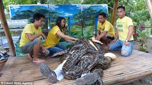 Kì lạ dịch vụ mát-xa trăn ở Philippines