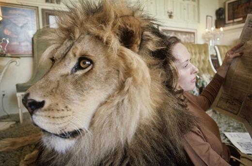 Gia đình 40 năm sống chung với một con sư tử