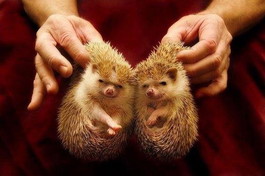 Đáng yêu những anh em thú cưng sinh đôi