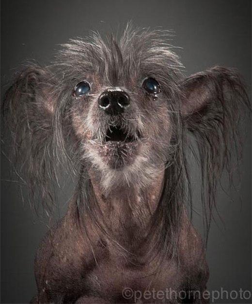 Ý nghĩa bộ ảnh chụp những chú chó già nua