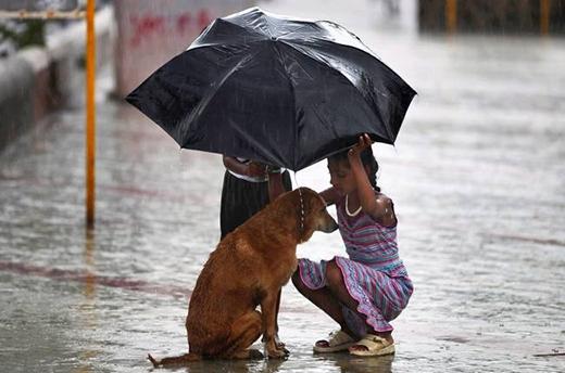 Hai cô bé đang cố gắng che mưa cho chú chó bị lạc trong những ngày mưa bão tại Mumbai
