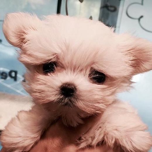 Tao khoe ảnh chú cún cực dễ thương
