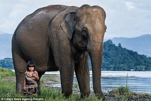 Tình bạn giữa con voi và bé Kim Luan như không thể tách rời. Ảnh: Caters News Agency