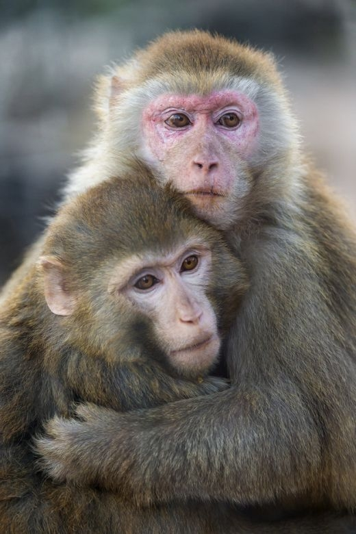 Những tập tính giao phối kỳ lạ của động vật