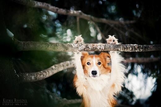 Ngây ngất với hình ảnh những chú chó tinh nghịch