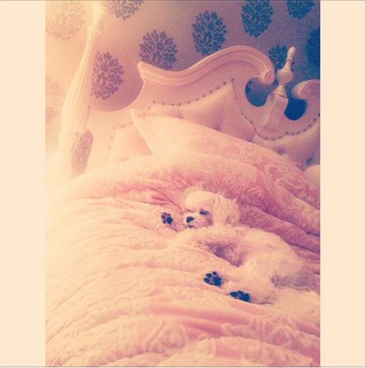 Tiffany khoe hình chú cún của mình vào sáng sớm trên Instagram và chia sẻ: Chào buổi sáng mọi người, đây là chú cún dễ thương nhất thế giới. Đừng gọi tôi dậy nhé.