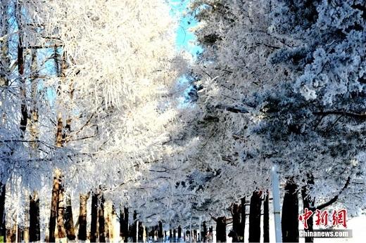 Được bao phủ giữa màu tuyết trắng xóa, dãy núi Đại Hưng An phía đông bắc Trung Quốc đã nổi bần bật giữa nền trời xanh trong khí trời lạnh buốt những ngày đông.