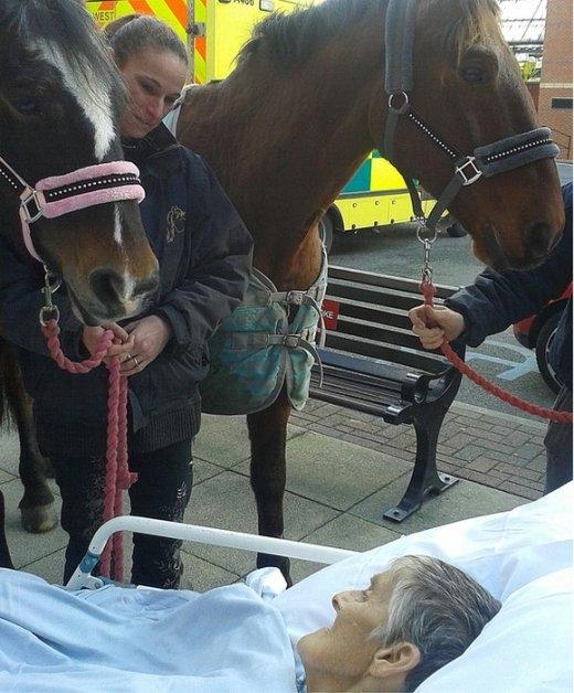 Xúc động với chú ngựa hôn vĩnh biệt chủ nhân trước lúc qua đời