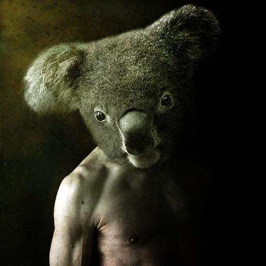 Chú gấu Koala đáng yêu thường ngày bỗng trở nên khá đáng sợ khi được ghép vào thân thể con người
