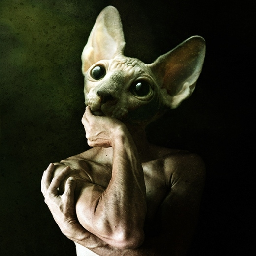 Bạn nghĩ sao nếu người kết hợp với loài mèo không lông Sphinx