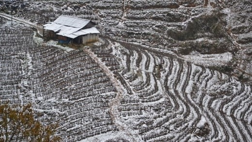 Tuyết phủ trắng các thửa ruộng bậc thang ở tổ 14, thị trấn Sa Pa