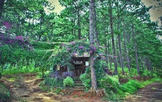 Nếu có dịp đi qua đèo Mimosa (Đà Lạt), du khách có thể ngắm ngôi nhà nhỏ xinh được phủ trong màu hoa tím ở lưng đèo. Trông cảnh này, du khách sẽ ngỡ như bước vào một câu chuyện cổ tích.