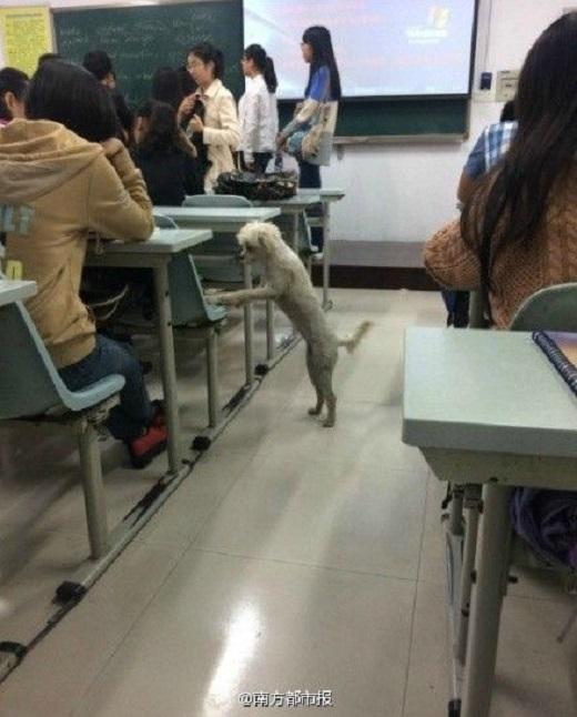 Chú chó chồm lên ghế ngồi