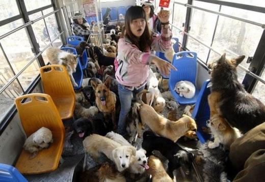 Dắt các em cún cưng đi xe buýt