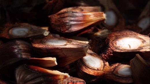Dừa khô dùng để làm kẹo dừa, vỏ thì phơi khô đem đốt