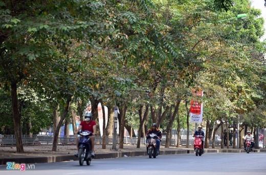 Dự án thay thế di chuyển hơn 200 cây xanh trên tuyến đường này được thực hiện theo cấp phép của Sở Xây dựng ngày 20/11/2014. Có kinh phí gần 3,5 tỷ đồng do doanh nghiệp tự chi trả 100% kinh phí, thực hiện theo hình thức xã hội hóa.