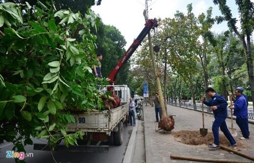 Trong ba ngày 28, 29, 30/11 hàng loạt cây xanh đã được chuyển đi đến nơi khác.