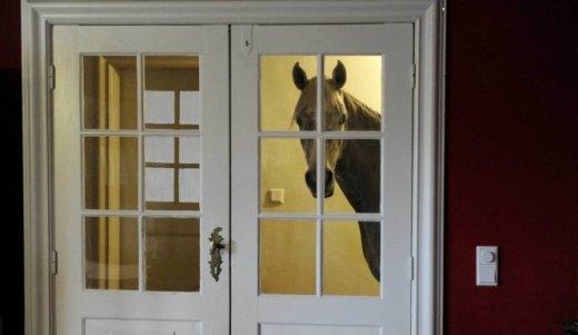 Một chú ngựa Ả Rập có tên Nasar đứng nhìn bên trong cửa phòng khách hôm 10-2-2014. Chủ nhà - bà Stephanie Arndt thường xuyên chăm sóc nó bên trong nhà kể từ sau khi cơn bão càn quét qua làng Holt, miền bắc nước Đức hồi tháng 12-2013. Chú ngựa thân thiện, thích soi gương và chơi cả đàn piano - Ảnh: CARSTEN REHDER-ZUMAPRESS.COM